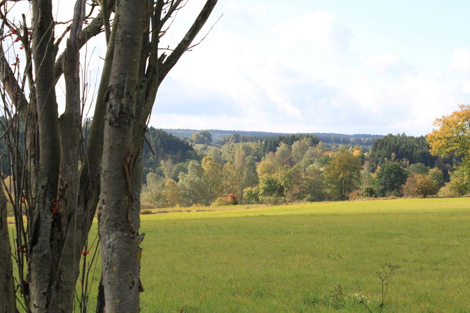 Wiese am Mühlberg